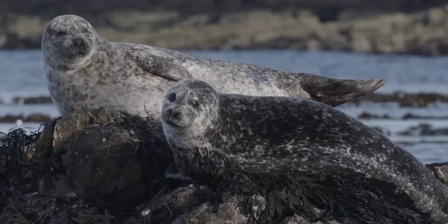 #CaseForChange: Saving Our Oceans Starts with Seals