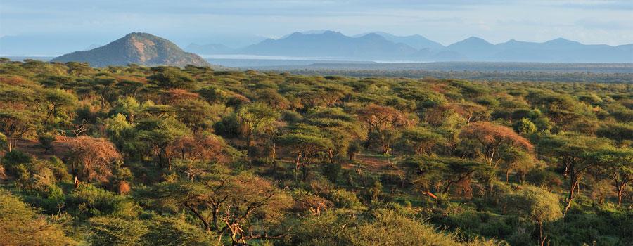 Samburu plateau at dawn, Kenya